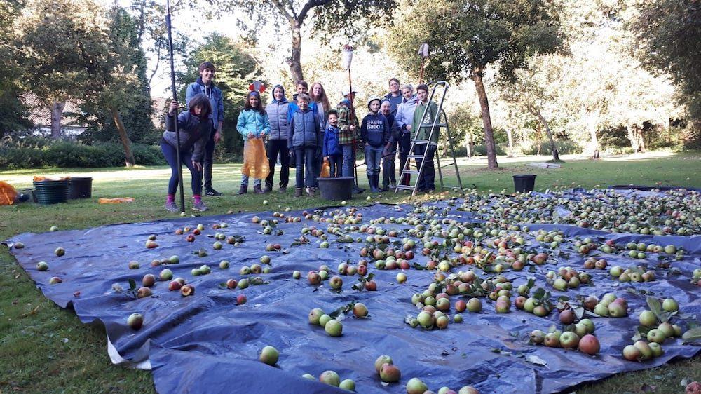 NABU kauft Äpfel von Streuobstwiesen auf